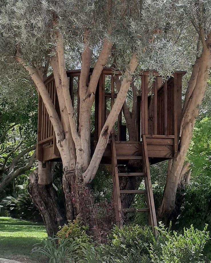 בית על העץ